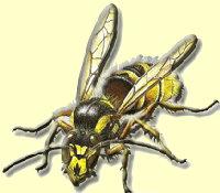 Aktion Wespenschutz